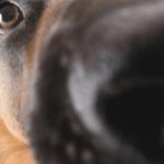 Spürhund_Header