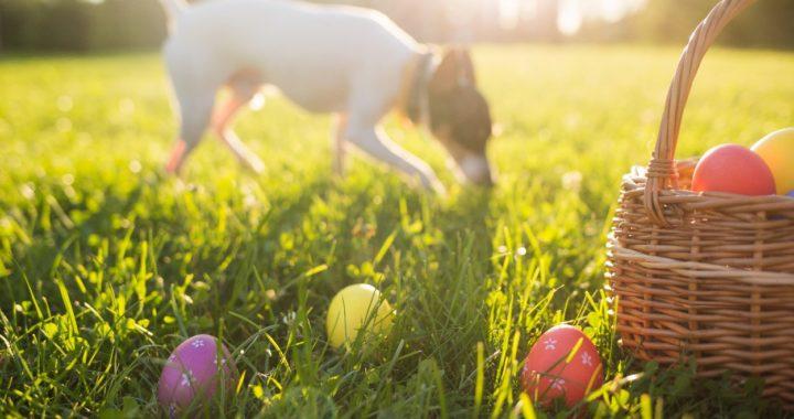 Krimiwanderung mit Hund - Ostern