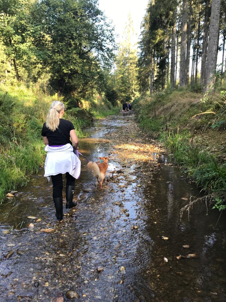 Herbstliche Bachwanderung im Kobernaußerwald