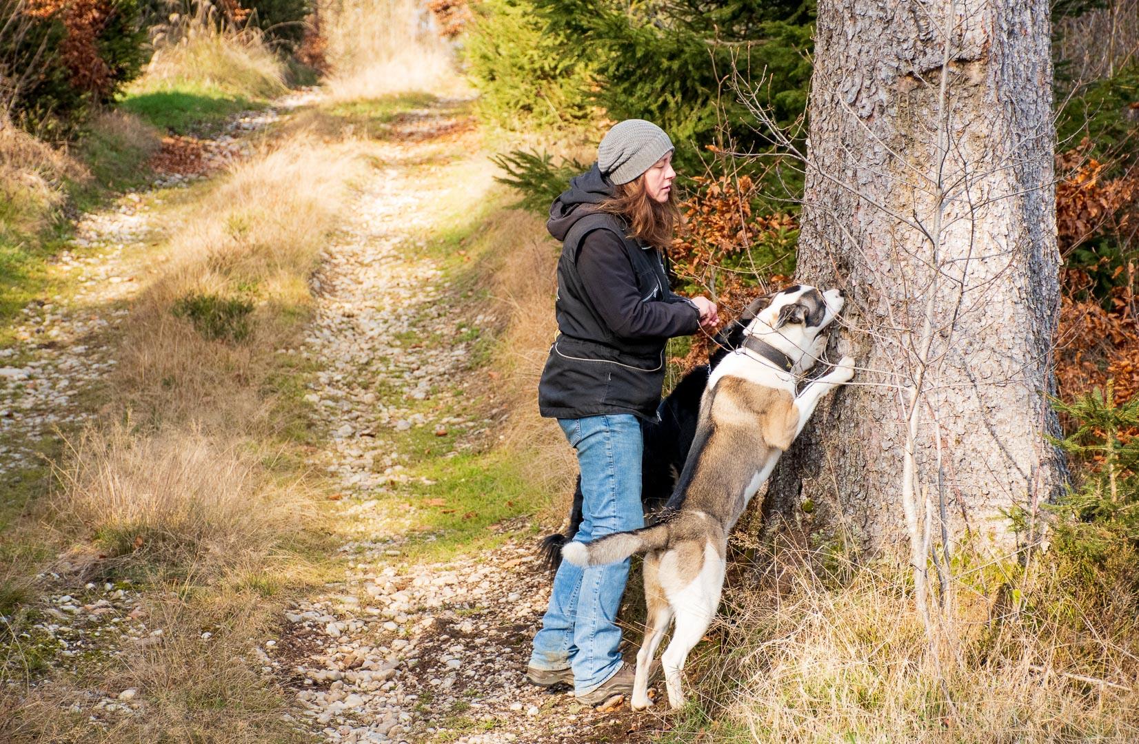Stock.Hund.Stein Herbst 2020