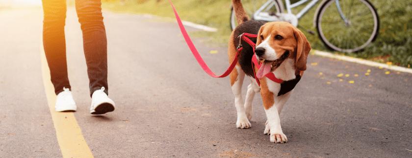Social Dog Walk – Mondsee