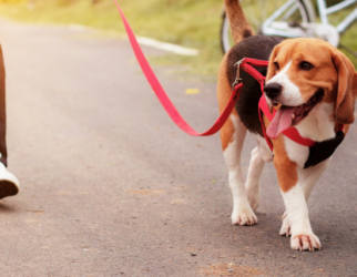 Social Dog Walk