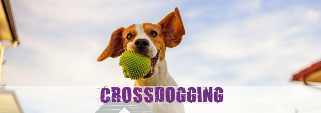 Crossdogging – Schnuppertraining